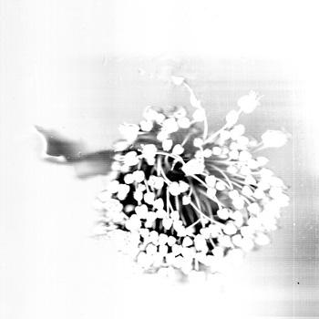 fleur_catherinep350.jpg